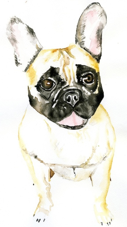 French bulldog copy