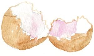 eggshell