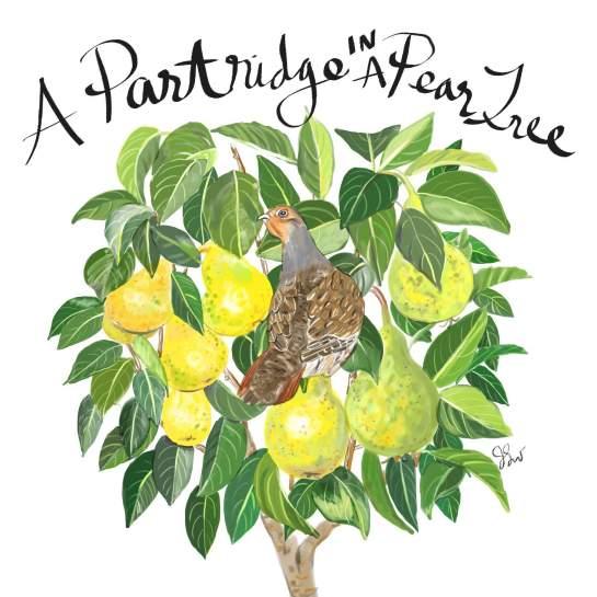a patridge in a pear tree_jessie kanelos weiner
