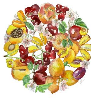 stone fruit 1315 copy