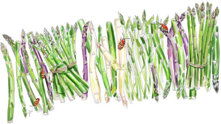 Edible Paradise_Jessie Kanelos Weiner_Illustration 3_thefrancofly