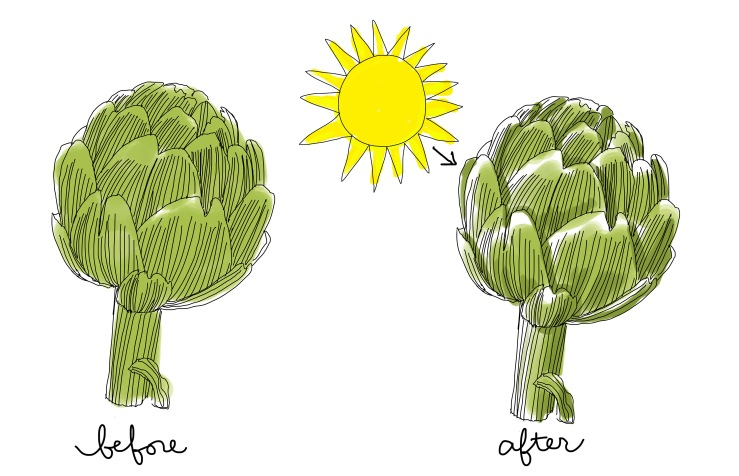 thefrancofly_Jessie Kanelos Weiner_how to color_artichoke